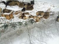 大青山15雪6